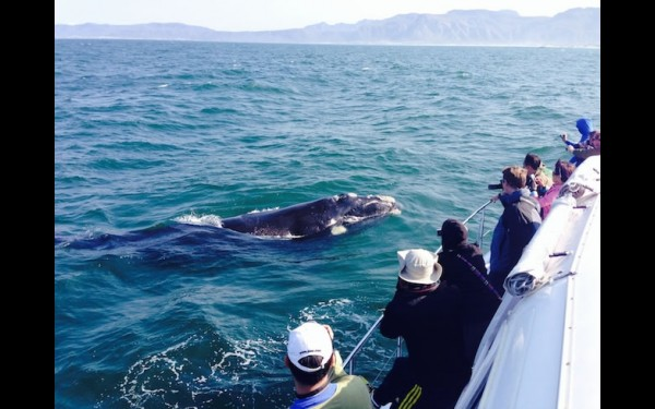 ЮАР. Наблюдение за китами