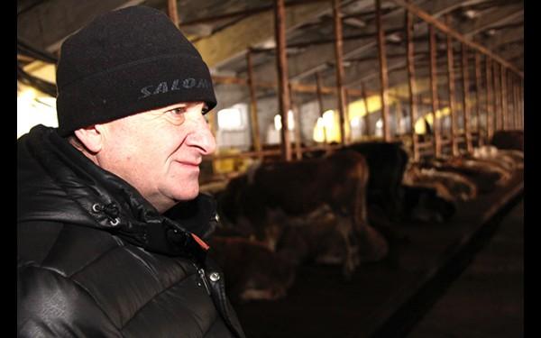 Гоги Кахиани: «Сейчас на ферме 200 коров. Пока выбрали мясное направление. Нужно расширяться и браться еще и за молочное животноводство».