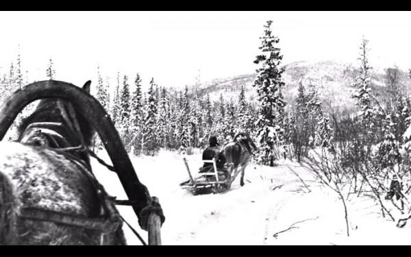 Лошадки в тайге — главный транспорт геологов и горняков.