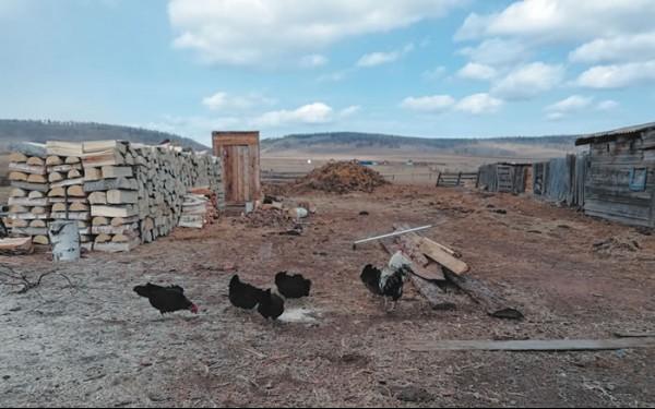 В каждой деревне свой уклад жизни: размеренный, неторопливый, без лишней суеты. По округе бродит скот, а рядом с домами прогуливаются курочки.