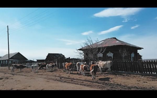 Еленинск, как и Нуху-Нур, во многом живет благодаря личному подсобному хозяйству. Здесь никого не удивишь 20—30 головами в одном подворье.