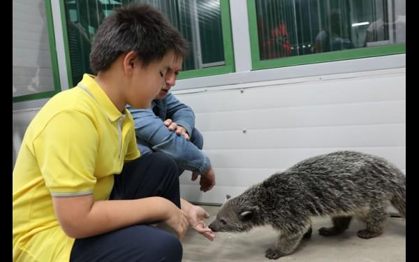 25 августа зоогалерея открылась на несколько часов —  в тестовом режиме; первые посетители в качестве бонусов получили возможность погладить бинтуронга и скунса