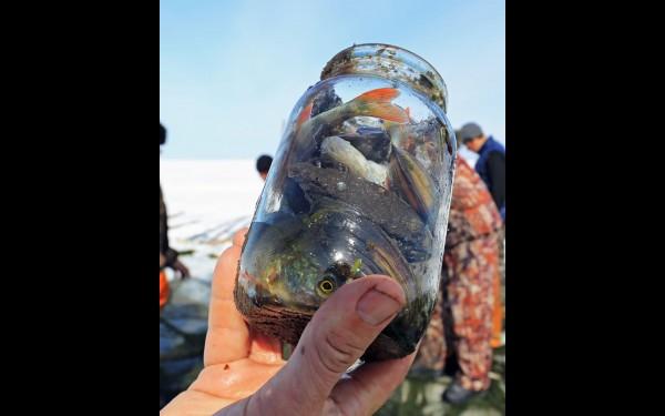 ... и даже банки, набитые ракушками и рыбой
