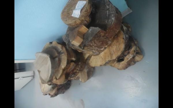 Средний возраст вырубленных деревьев, спилы которых доставляют в дендрологическую лабораторию, — 100—120 лет. Но встречаются и рекордсмены-долгожители. Однажды из Катангского района был доставлен спил сосны, по которому эксперты определили, что возраст дерева на момент рубки — 420 лет