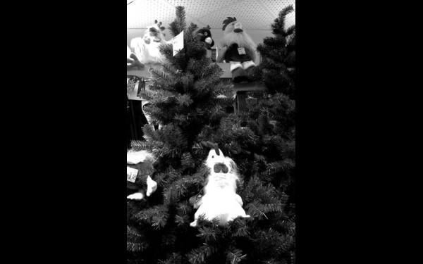 Не стоит забывать про хозяина наступающего года — Петуха, уютно устроившись под елкой,он сделает новогоднюю ночь по-настоящему волшебной.