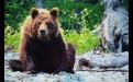 На Берегу бурых медведей