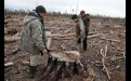 По словам специалистов, обугленная со всех сторон кора на пне говорит о том,  что дерево было отправлено под санитарную рубку по всем правилам