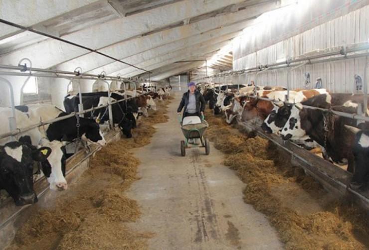 Одна из главных забот у фермеров – накормить поголовье. Поэтому все заготавливают корма впрок.