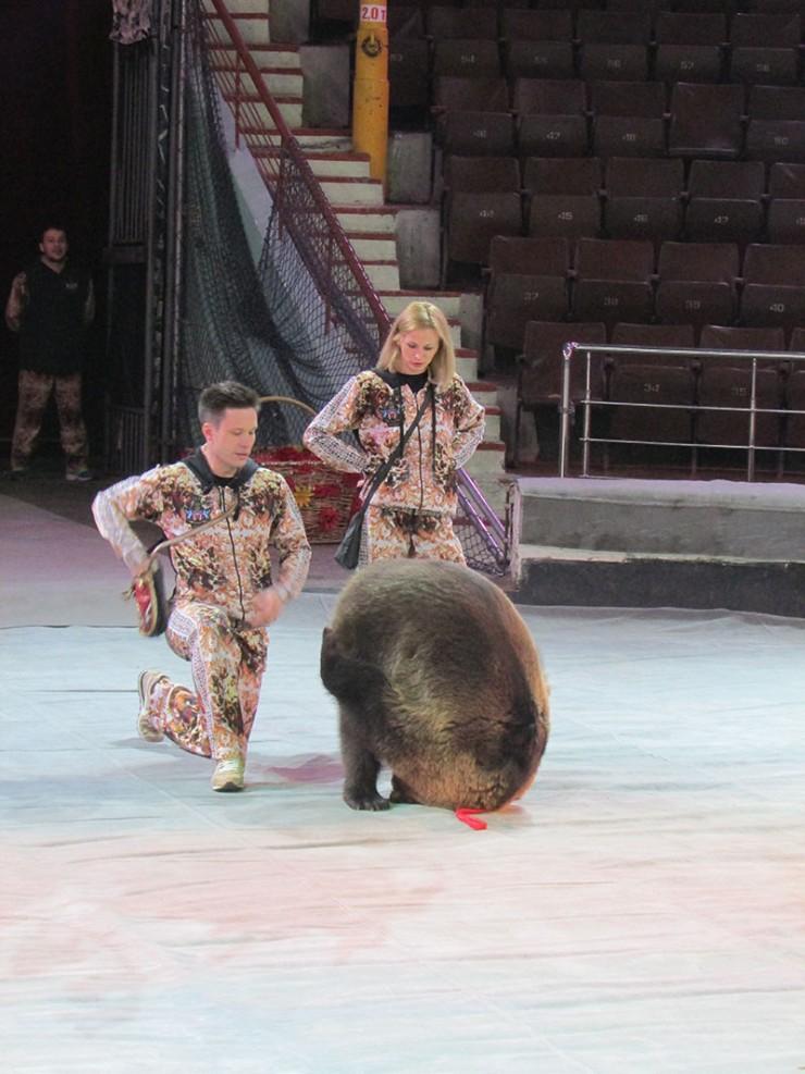 Екатерина и Алексей Плотниковы медведей воспитывают с самого юного возраста, как только те открыли глаза. В их номере одновременно с медведями выступят лошади и артисты балета.