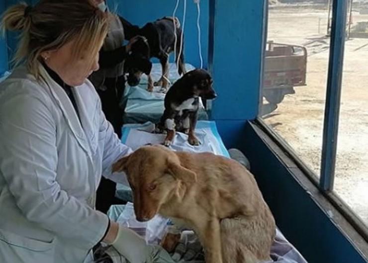 Собакам нужны лечение и тепло
