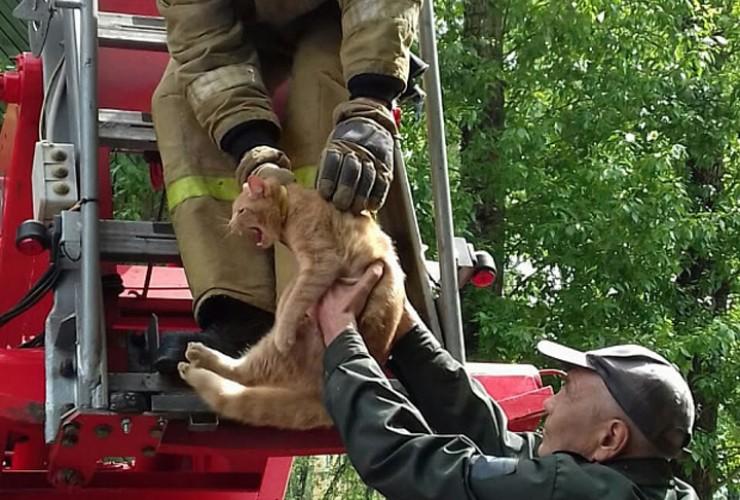 Кот сидел на высоте четырехэтажного дома. Чтобы достать его с дерева, пожарным пришлось использовать автолестницу. Спасенного зверя передали в руки радостному хозяину. По его словам, кот провел на дереве восемь дней. Питалось все это время животное предположительно одной дождевой водой. «Посажу дома на поводок!» — сказал хозяин спасенного кота