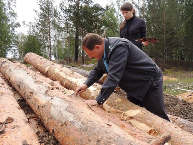 Теперь отбор проб древесины для исследований проводит госинспектор Россельхознадзора