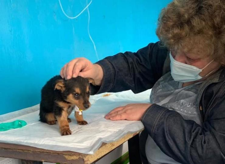 На фото — волонтер Ирина Кульгавая. Иркутянка помогает ставить капельницу маленькому щенку, вывезенному из приюта «Пять звезд». Теперь у него есть шанс выжить и обрести любящего хозяина