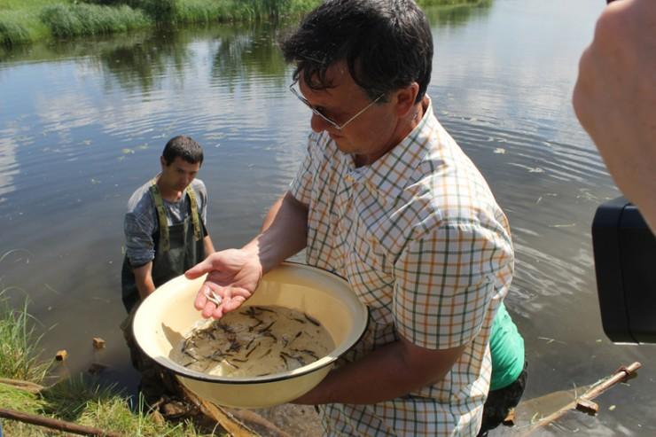 В этом году в водоемы Иркутской области завод выпустит от 4,5 до 5 млн особей пеляди и от 700 тысяч до 1 млн — хариуса.