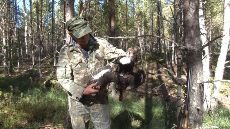 На Эхирит-Булагатский район выделено 140разрешений на боровую дичь