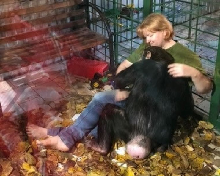 Шимпанзе Лея чувствует доброе отношение к себе  и отвечает Людмиле Ивушкиной взаимной любовью