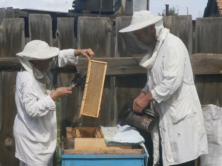 Семье Гергесовых любовь к пчеловодству перешла по наследству