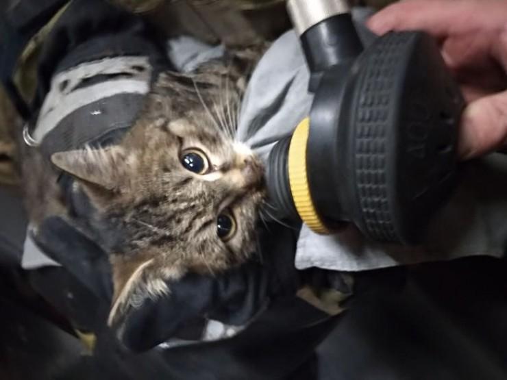 А этого кота спасли и откачали на пожаре в садоводстве «Бирюсинка» в Иркутском районе. Начальник караула первой пожарно-спасательной части Алексей Захарьев привел животное вчувство, а позже его забрал хозяин