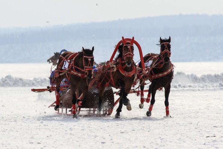Победителями скачек стали гости из Бурятии, они выиграли абсолютно все заезды и получили приз за самую нарядную упряжку.