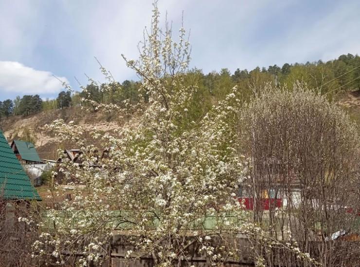 Нынешней весной ничто не предвещало беды, цветение было обильным. Но затем начались неприятные сюрпризы…