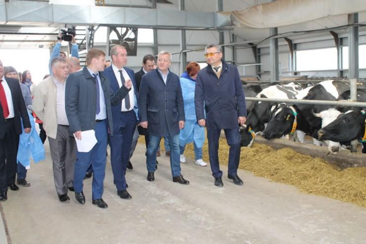 На молочном комплексе Иркутского масложиркомбината в Олонках построили современную молочную ферму и доильный зал.