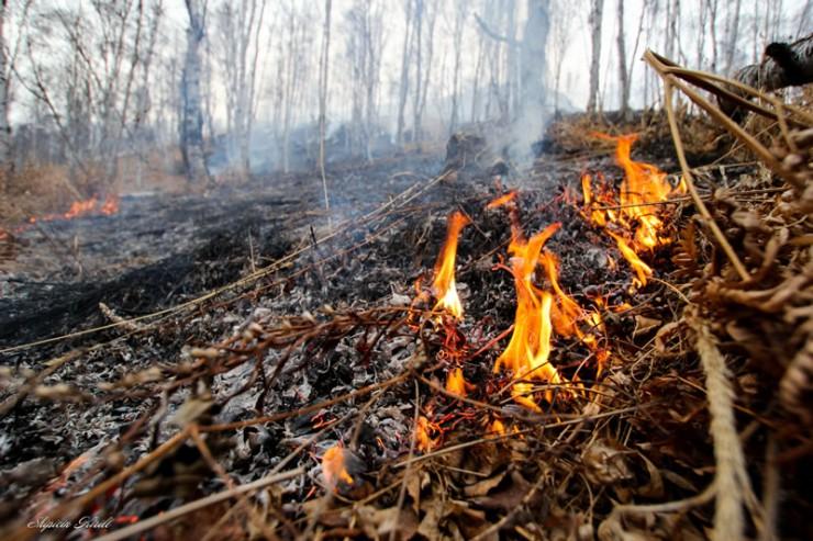Лес в районе станции Ангасолка загорелся еще в конце марта. Огонь был небольшим, его потушили местными силами.