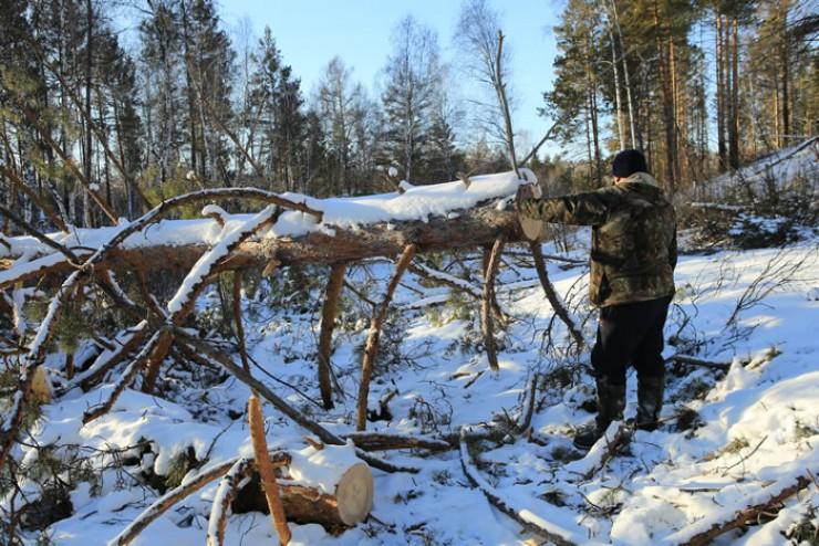 В Иркутском районе в очереди на дрова числится 76 человек, но расчищать участки, где хозяйничали «чёрные» лесорубы, запрещает закон. Ещё год самовольные рубки будут находиться в ведении МВД, и только потом брёвна пустят на дрова