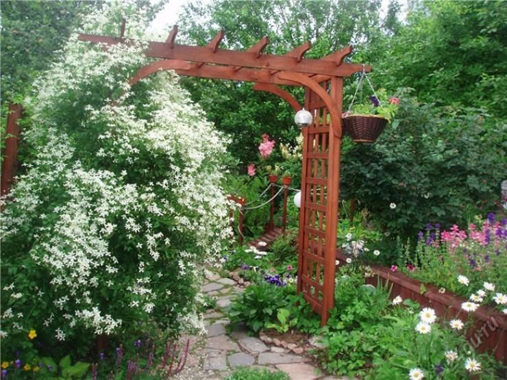 Клематис прямой к середине лета может вырасти до полутора метров.