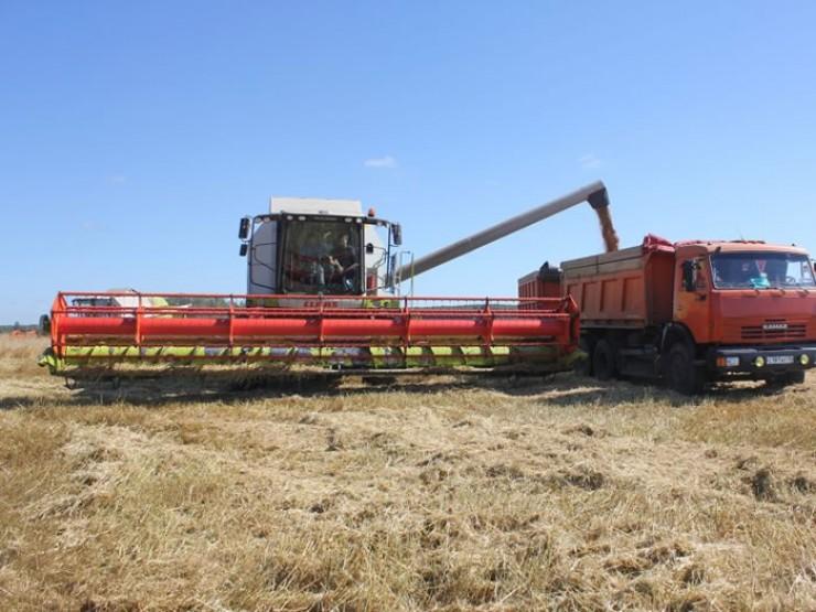 Уборочная работа идет тяжело, но аграрии не намерены оставить урожай под снегом