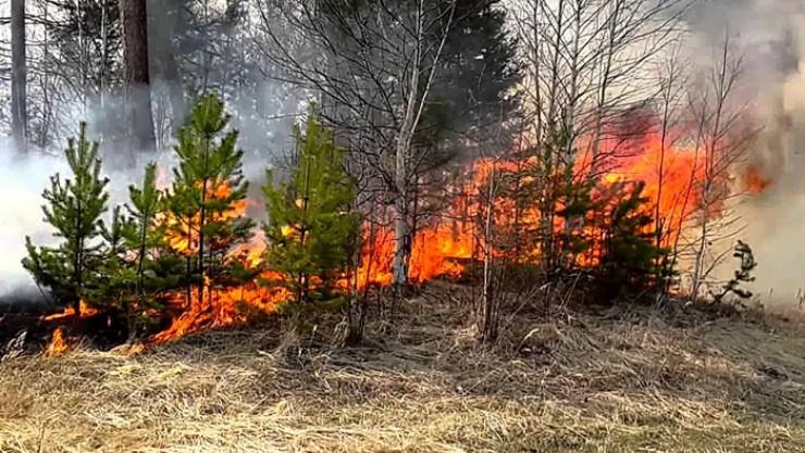 Лесной пожар принес немало хлопот жителям деревни. Справиться с ним удалось к утру 9 мая.