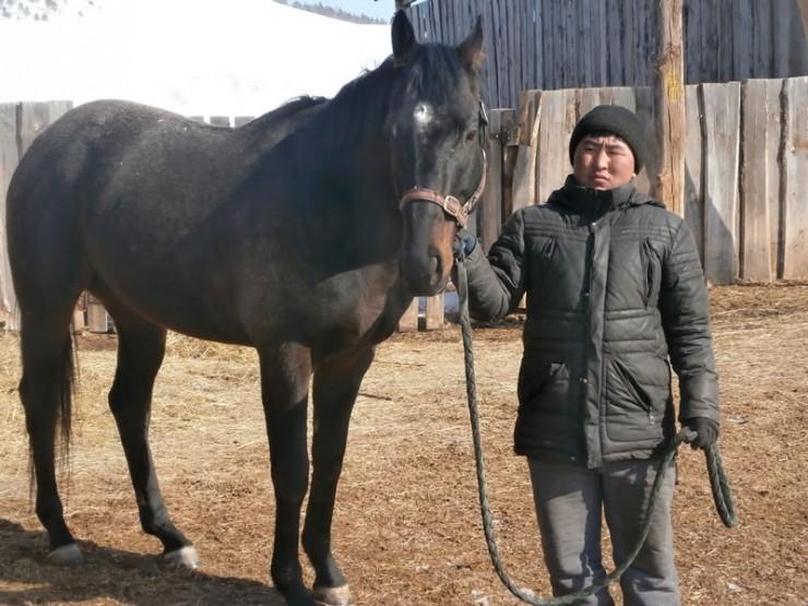 Лошади требуют большого ухода. Поэтому на ферме всегда есть кто-то готовый вывести коней на прогулку.
