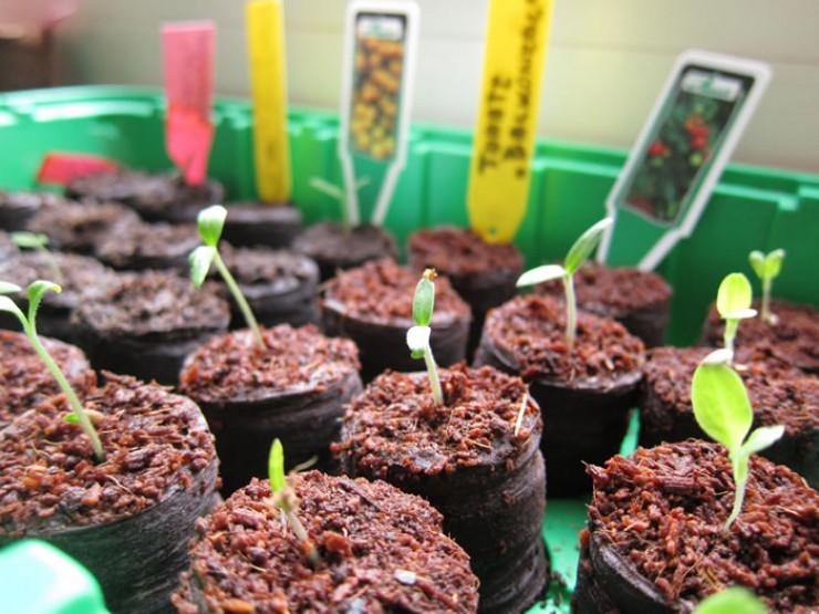 Будьте внимательны. Неправильно выбранные семена могут не просто испортить планы на урожай, а занести инфекцию на весь участок.