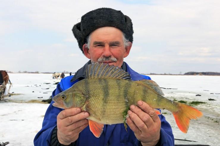 Павел Благодетелев 40 сезонов подряд выходит на лёд Байкала. В  руках бригадир держит трофейного окуня весом 1,4 кг —  подобные  экземпляры редкость даже  для неводной рыбалки