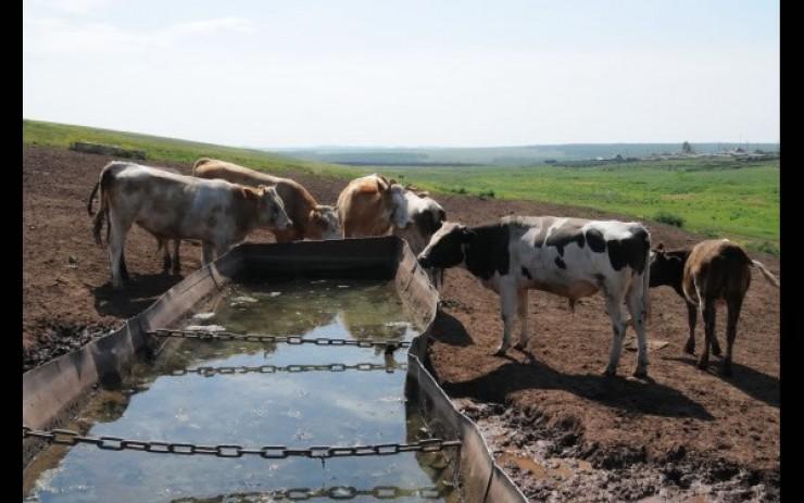 Напоить людей в деревнях — это еще не все. Важно, чтобы вода всегда была у скота, ведь от стада зависит благополучие жителей небольших населенных пунктов.