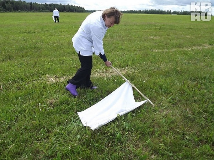 Полотнищем медленно проводят по траве по всему участку и за забором. Если клещи есть, то вы их сразу увидите на ткани.