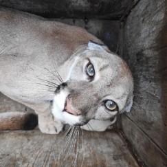 Пума Гектор исполнила роль кота, входящего в новый дом