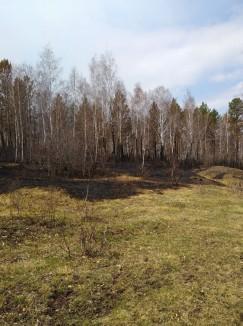 От жилых домов кромку лесного пожара отделяли лишь несколько линий опашки да деревенские огороды.  С десяток пролетов в деревянных изгородях — это,  к счастью, все, чем удалось отделаться.