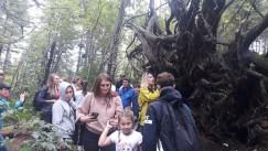 Таких огромных коряг —вывернутых корней упавших вековых деревьев —натропе «Сказочная» несколько. Возле каждой можно остановиться, рассмотреть подземную, обычно невидимую ипричудливую часть дерева исделать фотографии