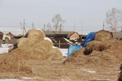 Даже в самый засушливый год в КФХ Мадаевой заготавливают достаточно кормов