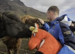 Где-то на просторах Исландии.  С местными лошадками