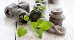 Торфяные таблетки используют многие огородники