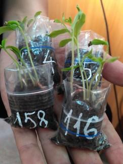 Тест на всхожесть семян разных сортов