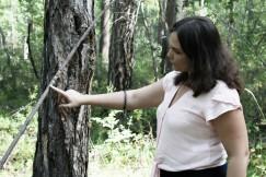 Сообщения друг другу кочевые народы Севера оставляли прямо на деревьях
